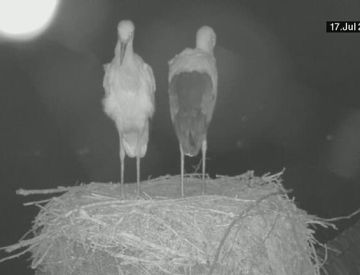 Webcams - Webcam Storchennest Burgebrach
